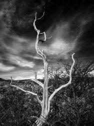 Tree in Salto Grande, Torres del Paine, Chile